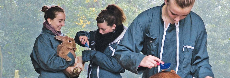 À la ferme pédagogique, les élèves soignent les animaux